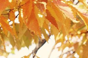 「庄内の秋」