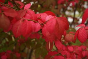 「鶴岡の紅葉」