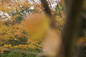 2016.10.30「庄内の秋」
